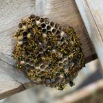 Pest Control Shrewsbury - 01939 291995 - Khitan Pest Control