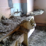 Pigeon Nests & Fouling in a Kitchen